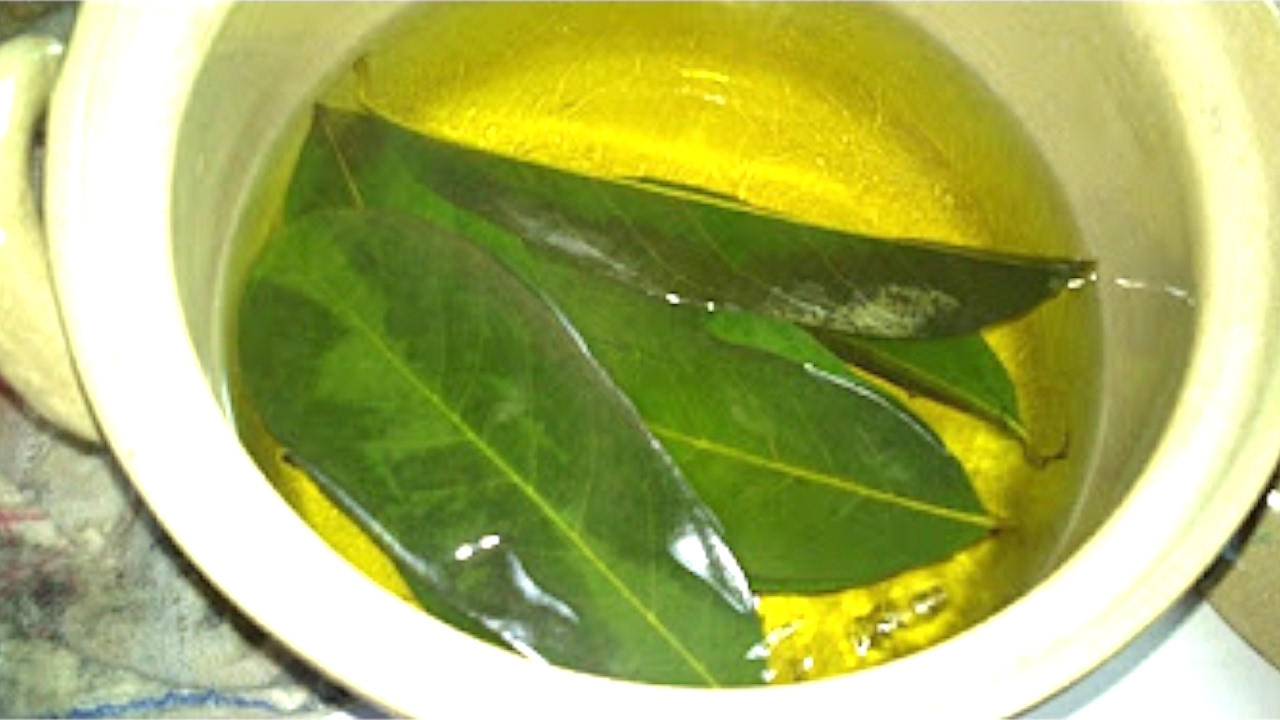 mango, mango leaves