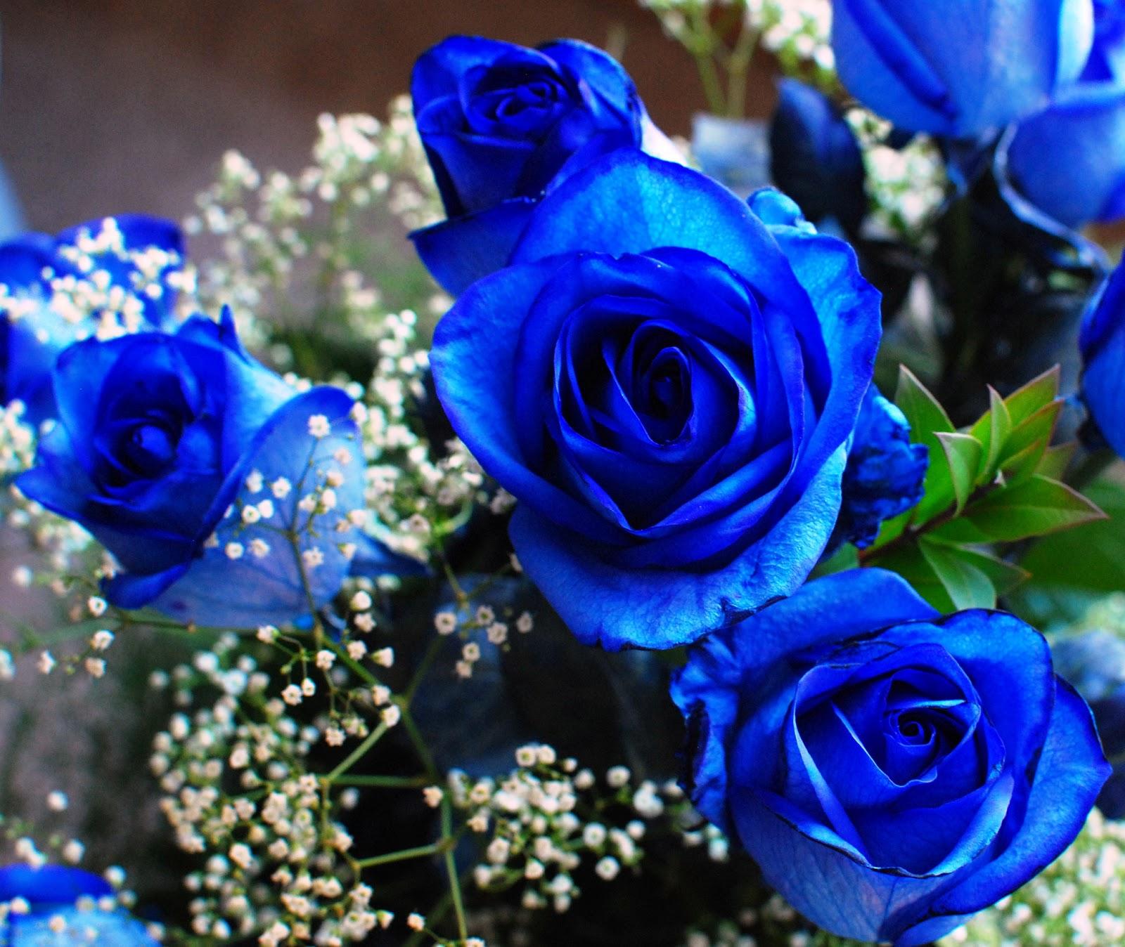 Dew Drops: Blue Flowers