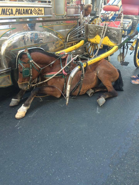 Netizens Ask Everyone To Save Kalesa Horses After What Happened To This Poor Horse! Heartbreaking!