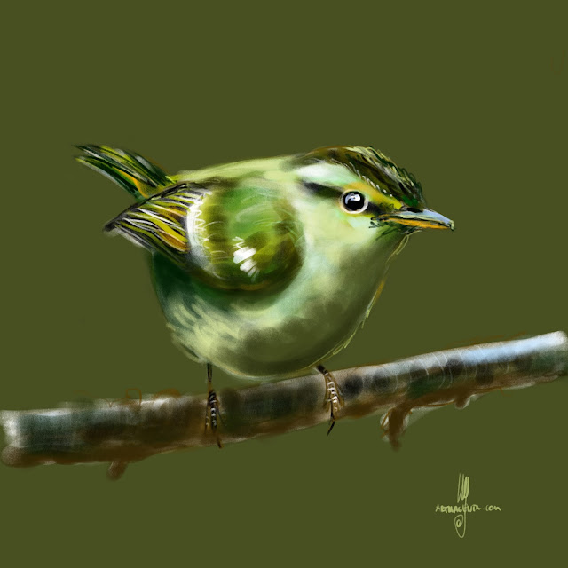 Greenish Warbler bird painting by Artmagenta