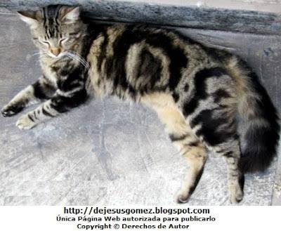 Foto de gato con mucho sueño de día, foto de gato de Jesus Gómez