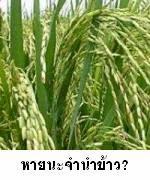 จำนำข้าวหายนะเศรษฐกิจข้าวไทย