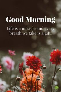 100+ Latest Good Morning Images Free Download for Whatsapp HD
