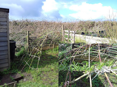 Allotment Growing - Living Willow Structure