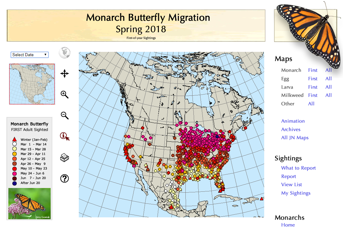 move north by checking the 2018 monarch migration map a screen shot of the map has been placed below as an example retrieved 29may2018 but follow the