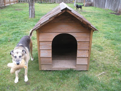 Dog House Training - How To House Train Your Dog