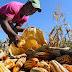 FAO destaca reducción pobreza en República Dominicana