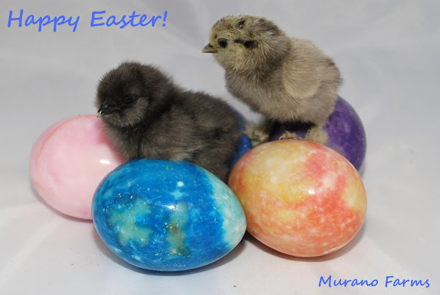 Chicks on colorful marble easter eggs