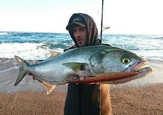 سمك المياس
