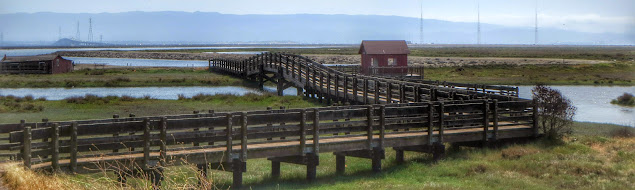 Birdwatching Bay Area: boardwalk and slough at Don Edwards National Wildlife Refuge