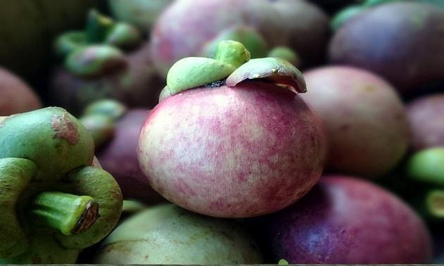 Mangostão (Garcinia mangostana L.)