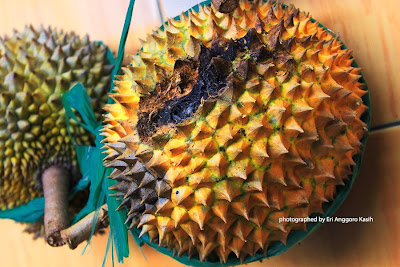 Durian bekas tupai yang berwarna kuning kehijauan, rasanya legit