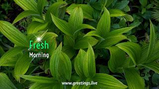 Fresh morning wishes green leafs BG HD image