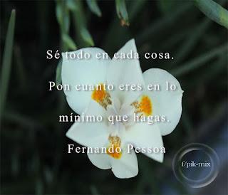 Sé todo en cada cosa | Fernando Pessoa | Fotografía