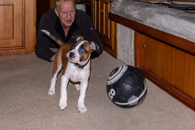 Photo of Ruby taking a break from attacking the ball