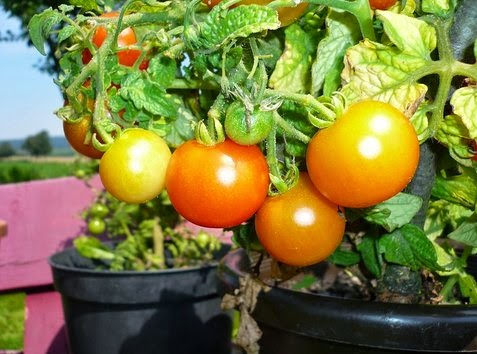 Being An Urban Gardener, Get Advantages To Container Gardening