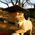 Ένας σκύλος από τη Κορέα!...