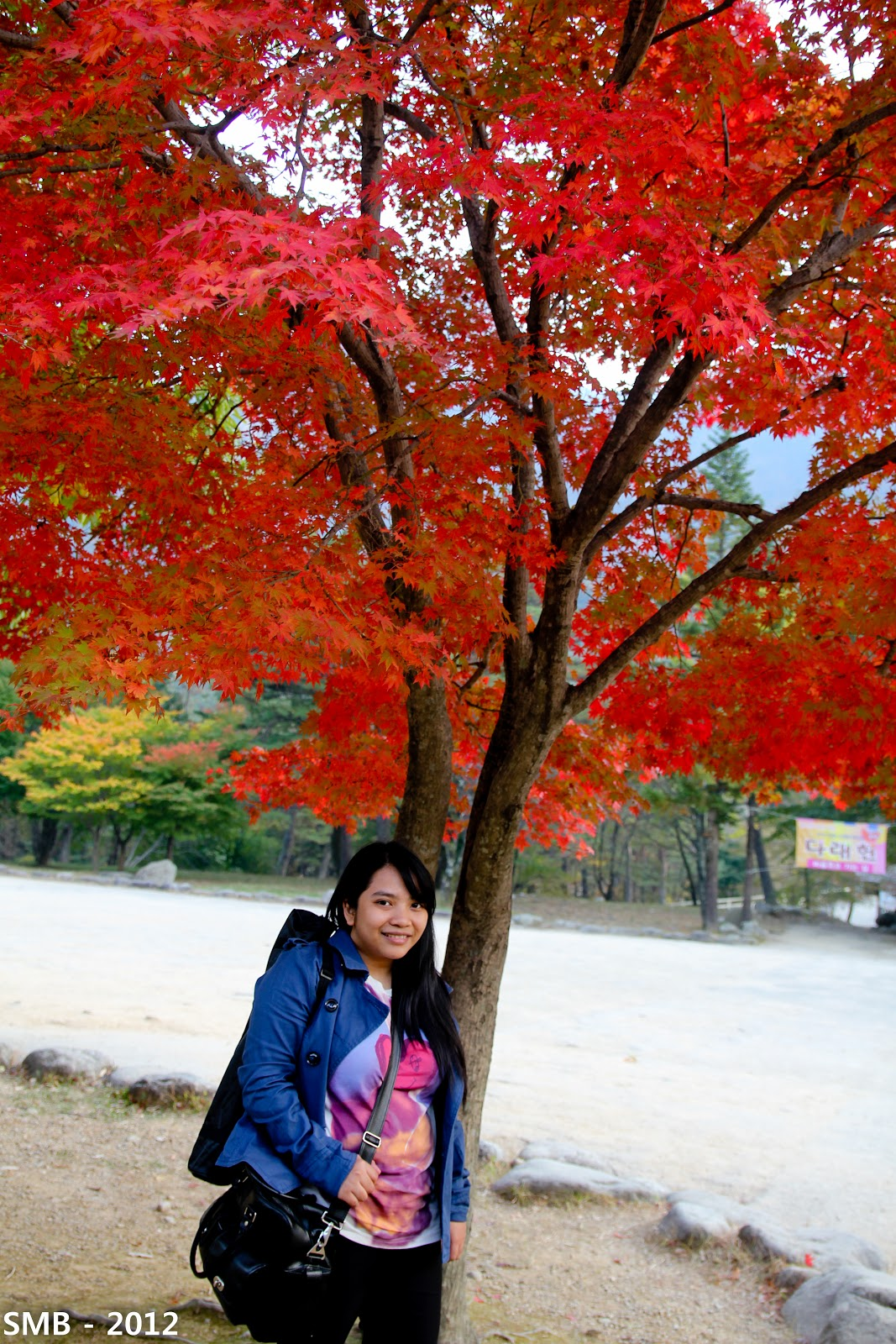 autumn korea blogger