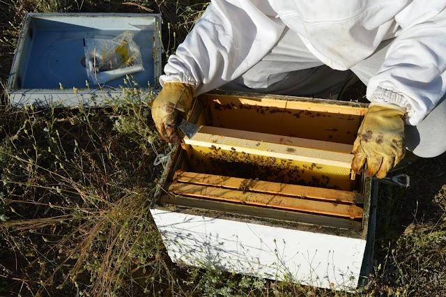 Ξεχειμώνιασμα μικρών μελισσιών ανά περιοχή: Επαγγελματίες μελισσοκόμοι λένε τα μυστικά τους