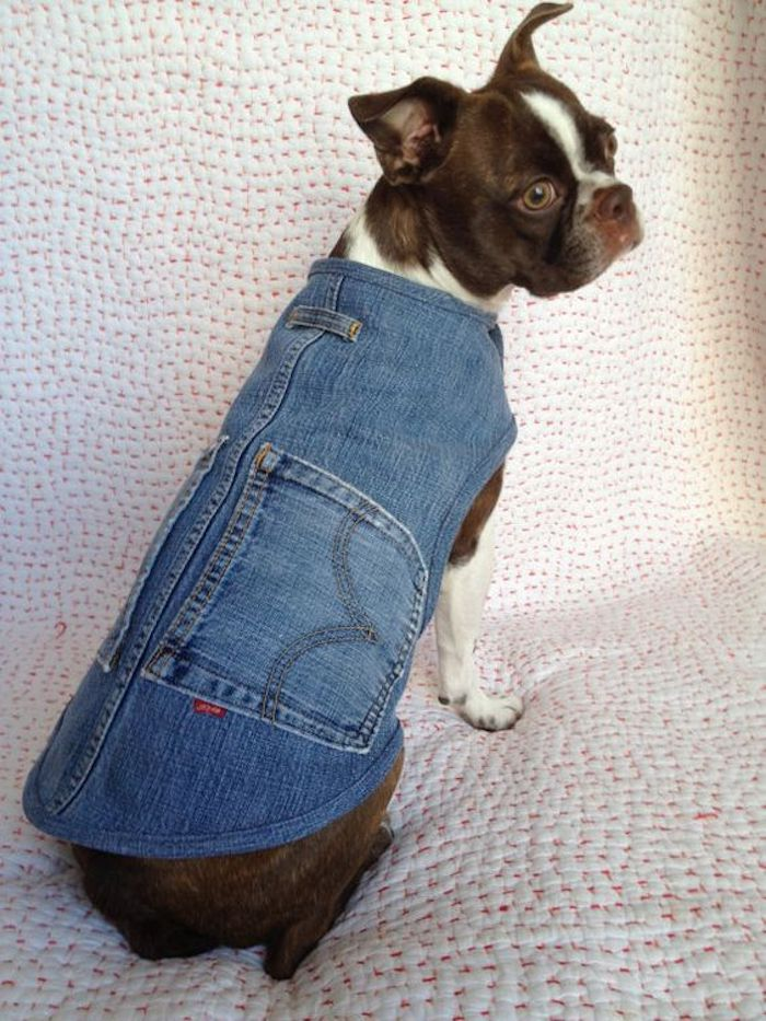 Abrigo para mascotas de tela vaquera