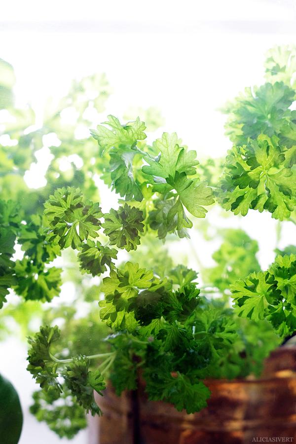 aliciasivert, alicia sivertsson, alicia sivert, i mitt lilla växthus, miniatyrväxthus, blommor, växter, blomma, växt, kryddor, krydda, persilja, basilika, vas, kruka, urna, loppis, kaffe, frukt, urn, pot, parsley, basil, plant, planting, odla, odling, fönster