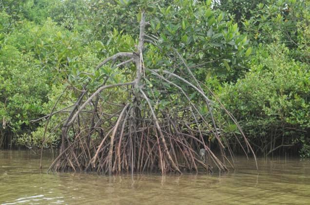 Profil Ekosistem Mangrove/Bakau