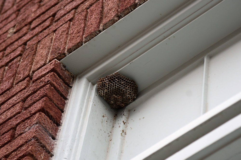 How to Keep your Home Free from Wasps