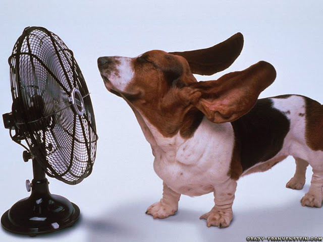 Funny Dog With Fan