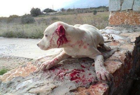 Φρίκη στο Αγρίνιο! Άγνωστοι σκότωσαν τρία σκυλιά και έγδαραν το ένα!