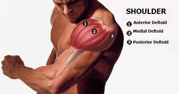 7 Most Effective Exercises For Building Massive Shoulders