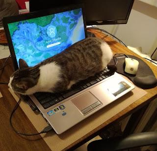 kot i dziecko, kot laptop