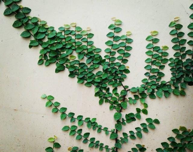https://tipspetani.blogspot.com/2019/05/tanaman-dollar-yang-cocok-dan-populer.html