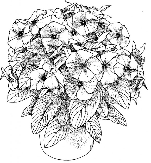 Flowers Coloring Pictures For Adults Only Coloring Pages