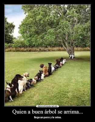Quien a buen árbol se arrima, ¡llega un perro y le orina!