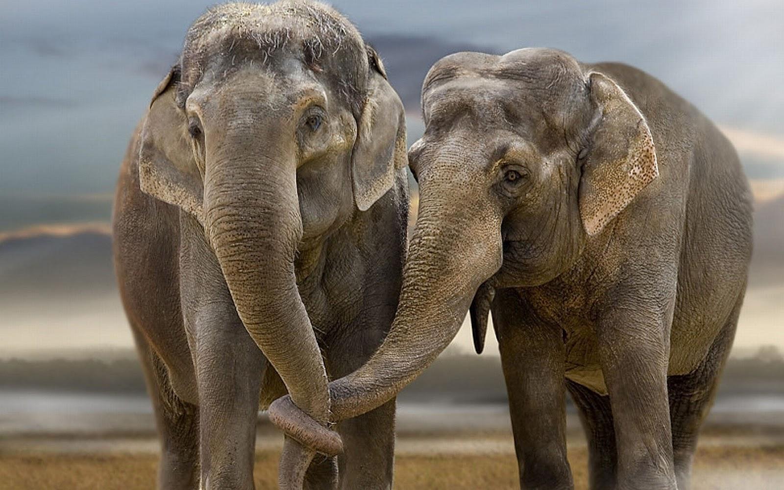 elephants wallpapers world - photo #8