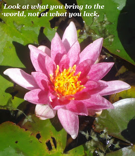 Image of a pink lily flower fully open on lily pads with text: look at what you bring to the world, not at what you lack