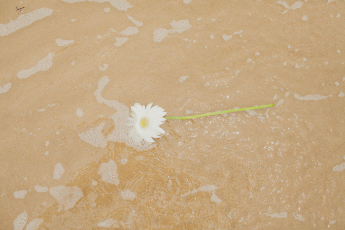 flower in the ocean