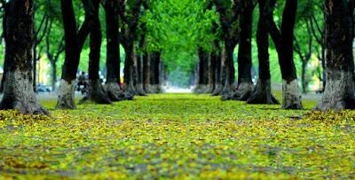 A peaceful Hanoi on the first autumn days 4