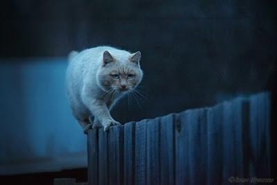 gatos-activos-durante-horas-nocturnas