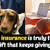 PET INSURANCE : 5 REASONS YOU NEED PET INSURANCE