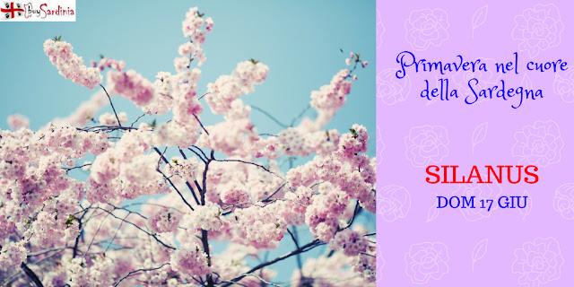 Primavera nel cuore a Silanus con buySardinia