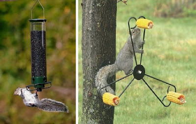 Squirrel spinner types