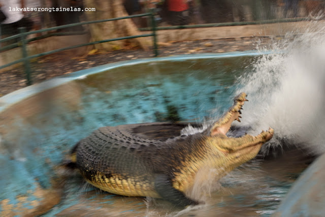 THERE'S MORE TO CROCODILES AT DAVAO CROCODILE PARK