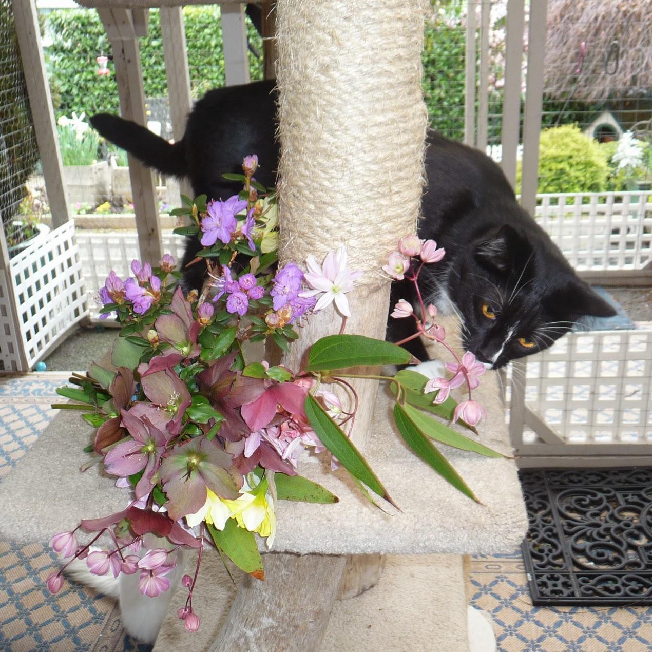 All My Kitties Happy Spring