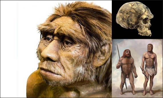 Sebutkan Jenis Manusia Purba Yang Ditemukan Di Indonesia