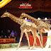 Il Circo Medrano a Bassano del Grappa. Serata di Gala speciale su invito omaggio