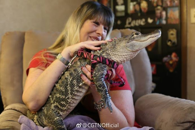 woman petting alligator