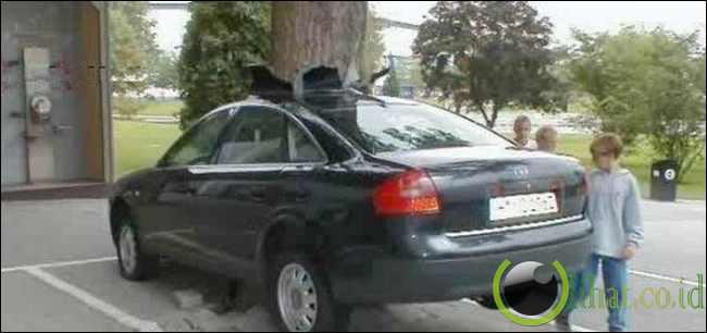 Mobil tertembus pohon