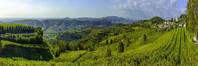 patrimonio umanità agricoltura gihas soave