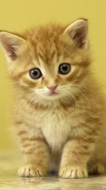Cute Cats #3   Cute Cats